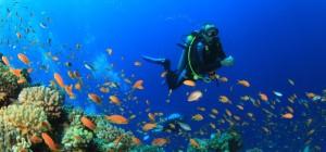 scuba-diving-reef-e1476482719834